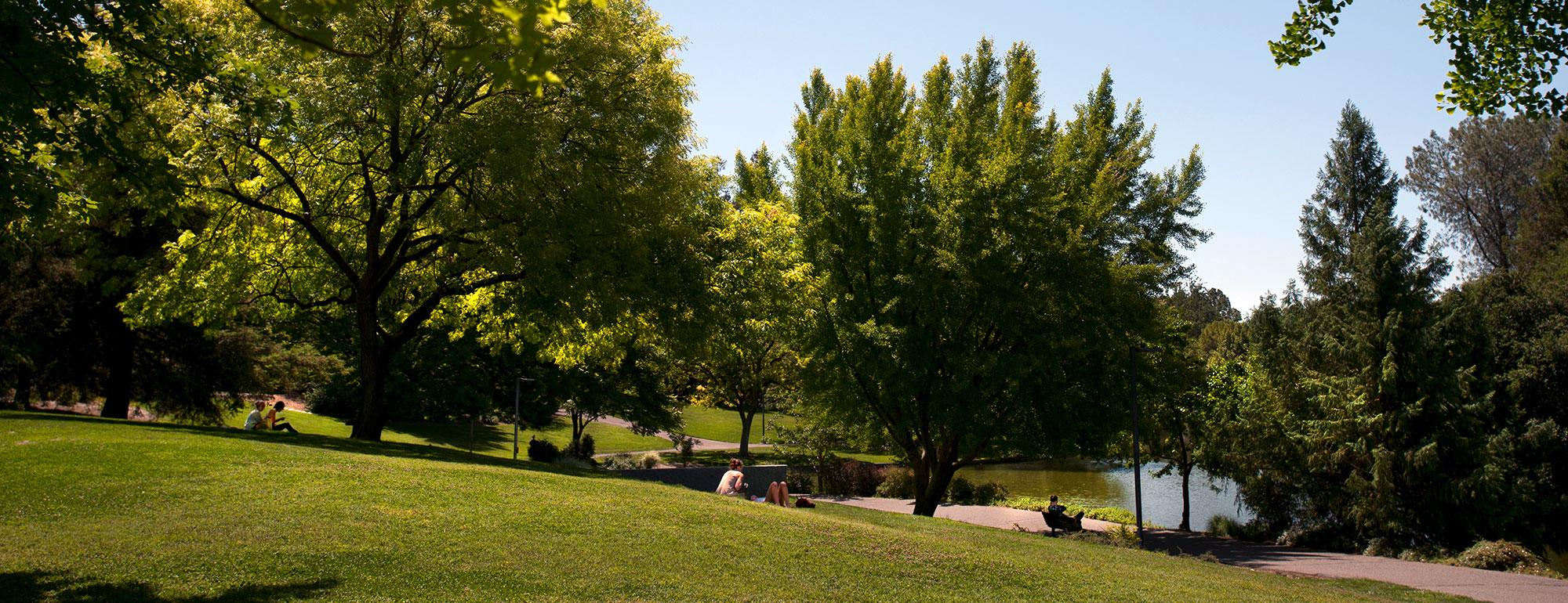 Panoramic photo of UC Davis Arboretum.